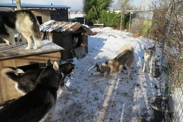 Snow schaut dem rauhen Spiel von der Hütte aus zu; später hat er dann mit einem Schnauzengriff für Arizona eingegriffen.
