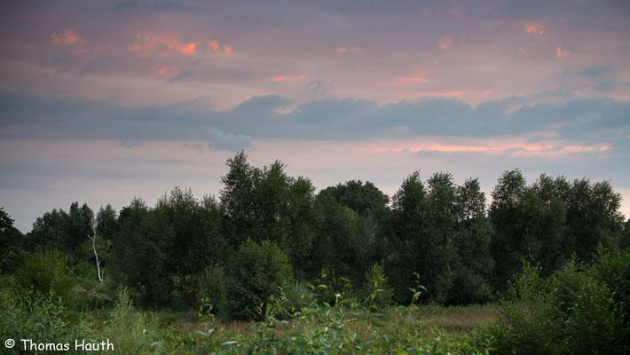 Langsam geht die Sonne im Osten auf. Morgenstimmung am Limburgerhofer Bruchgelände.
