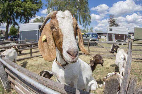 Arolser Kram- und Viehmarkt 2018