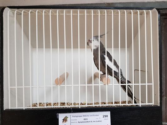 1,0 Jungvogel beim ersten Schautraining