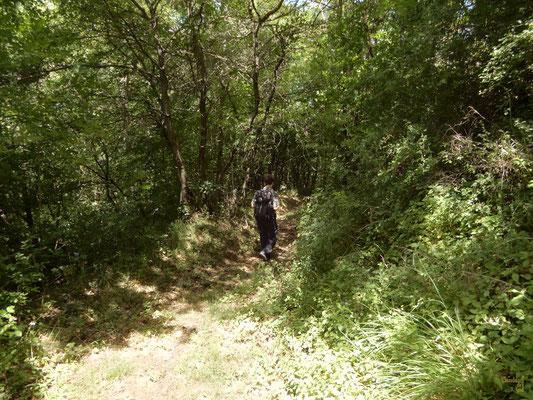 Nel bosco di castagni 🌰