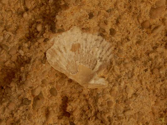 """Diffusa nel territorio, la Calcarenite di Gravina, nota anche come """"tufo calcareo"""" per la sua leggerezza e porosità che la rende facilmente lavorabile. ⛏  E' un tipo di roccia sedimentaria clastica, formata da particelle calcaree e fossili marini 🐚"""