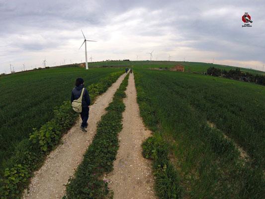 Tra campi di grano