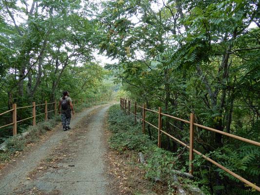 Lungo il sentiero dell'acquedotto costeggiando la Fiumara di Atella 💚