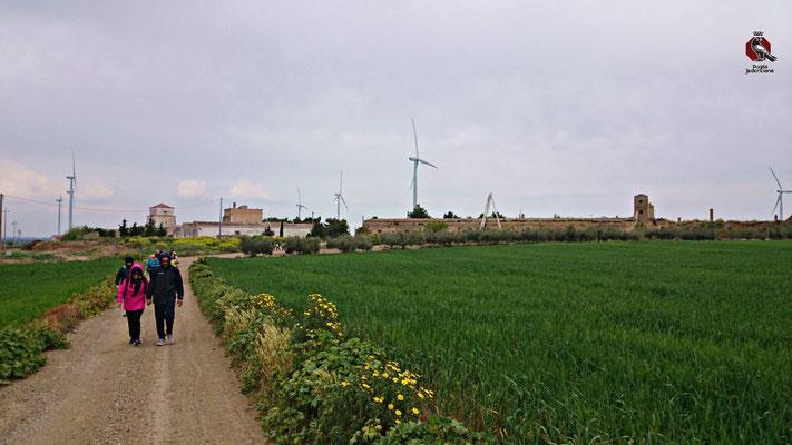 Immersi nella vita agricola tra ulivi, vigne e asparagi e sullo sfondo la Masseria Cirillo