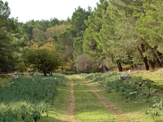 I sentieri del Bosco Finizio