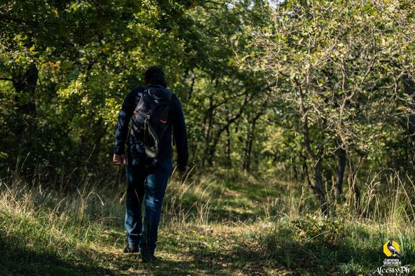 Tra i sentieri del bosco