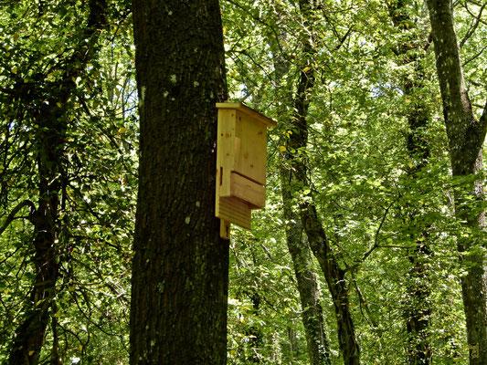 Una delle tantissime Bat Box presenti nel bosco. Rifugi per pipistrelli. 🦇
