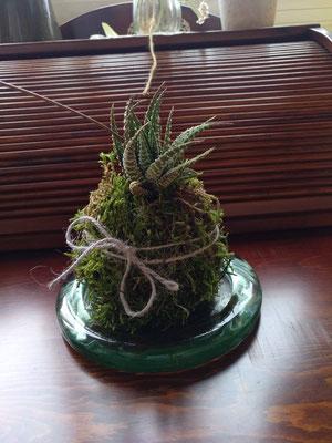 kokedama con Aloe hawortia