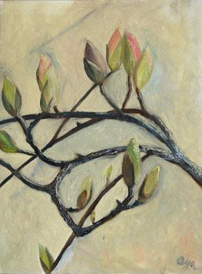Serie: Magnolien, Öl. 2013 (copyright: oya-kunst, Nadide Ruthammer)