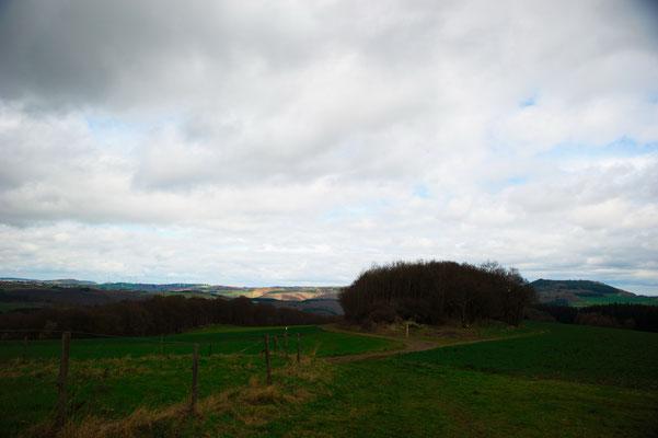 Förstersteig 2Traumpfad, Eifel, Mosel, Rhein, Wandern, Natur, Fotografie, Traumpfade,