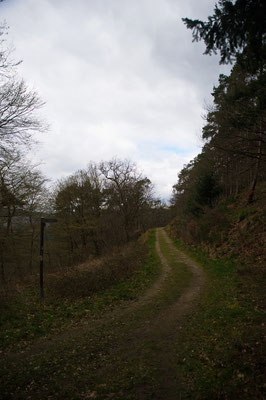 Förstersteig 4 Traumpfad, Eifel, Mosel, Rhein, Wandern, Natur, Fotografie, Traumpfade,