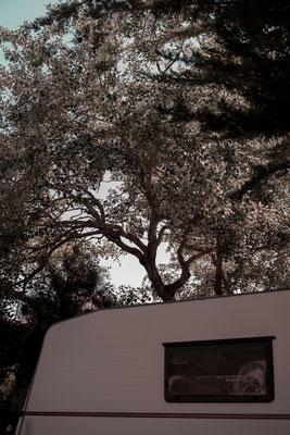 Blätter Dach auf dem Campingplatz auf der Il de Re.