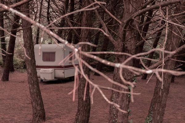 Ein alter Wohnwagen im Pinienwald auf der Il de Re.