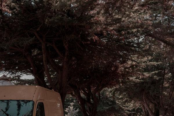 Altes Postauto mit gelber Lackierung unter Bäumen auf der Il de Re.