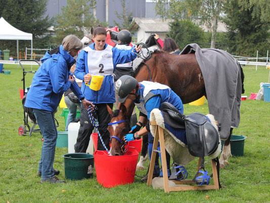 CEI2* Schweizermeisterschaft Dielsdorf 2015 - Foto: Jenny Commons