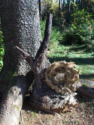 Schnecke Waldtagesfamilie