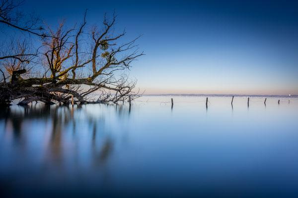 Bild Nr. 2020_8823: Baum am Wasse