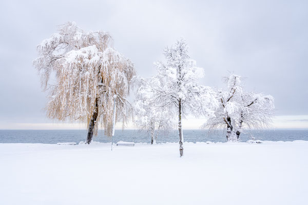 Bild Nr. 2021_0901: Tief verschneite Bäume am Bodensee