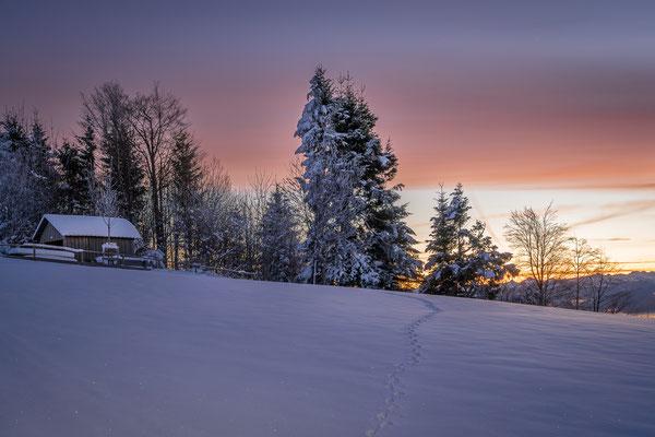 Bild Nr. 2020_9848: Farbenfroher Wintermorgen