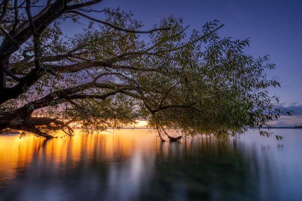 Bild Nr. 2020_2249: Baum am Wasser im Abendrot