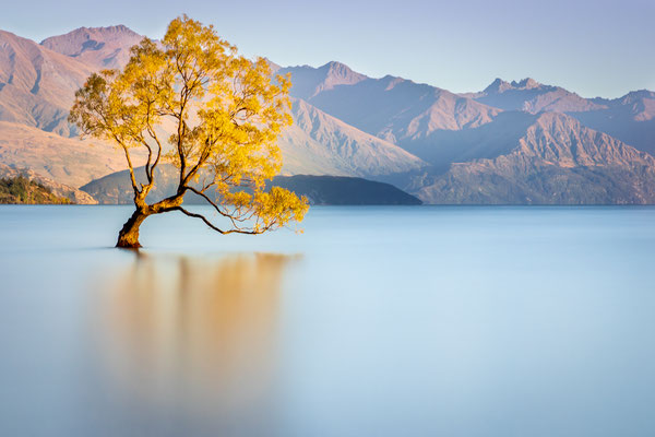 Bild Nr. 2019_4399: Baum im Lake Wanaka, Neuseeland