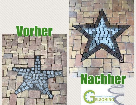 Freiburger Gartenbau Gelsomino - Stern-Ornament -