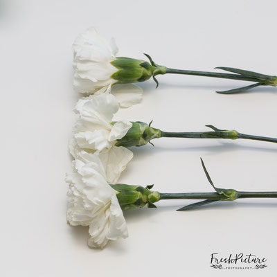Elegante Hochzeitsdeko