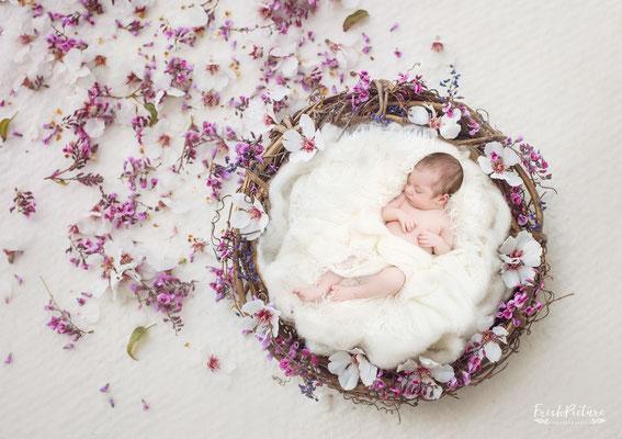 Babyfotograf Karlsruhe