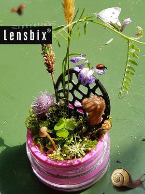 lensbix upcycling -  Artenvielfalt im Minibiotop , ab hier macht die Pilzkultur Spaß   /  #Kontaktlinsenbehälter /# Kontaktlinsenbox / Box für #Kontaktlinsenaufbewahrung  / #Kontaktlinsendose / #Kontaktlinsen-behaelter