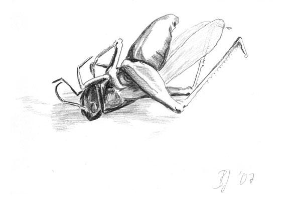 Grashüpfer,Bleistift auf Papier