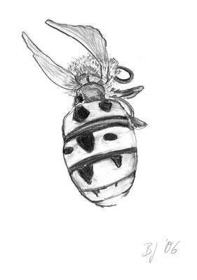 Wespe,Bleistift auf Papier