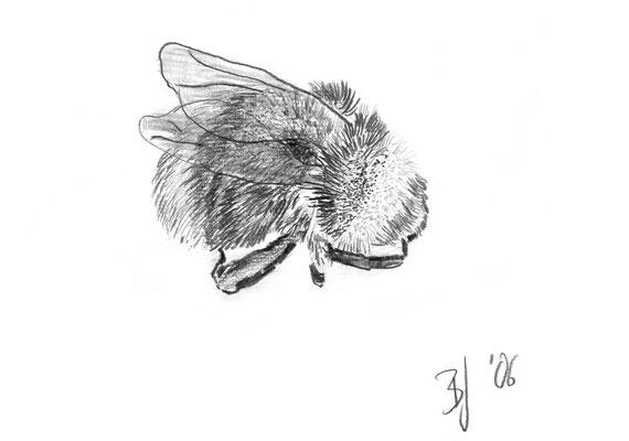 Hummel, Bleistift auf Papier