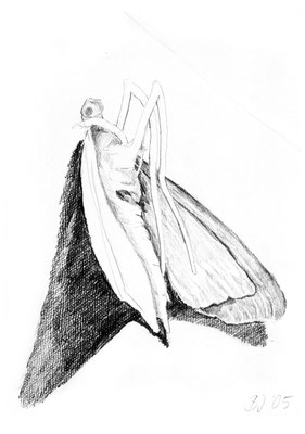 Motte,Bleistift auf Papier