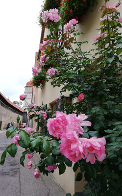 ... Rosen für Svitlana de la Rosa ... unsere musikalische Rose ...