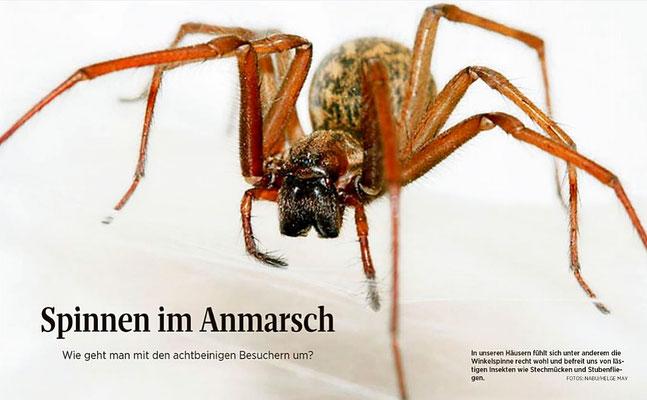 Spinnen im Anmarsch - SZ, Presse 2016-11