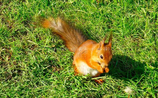 Dans le camping un petit écureuil nous rend visite...