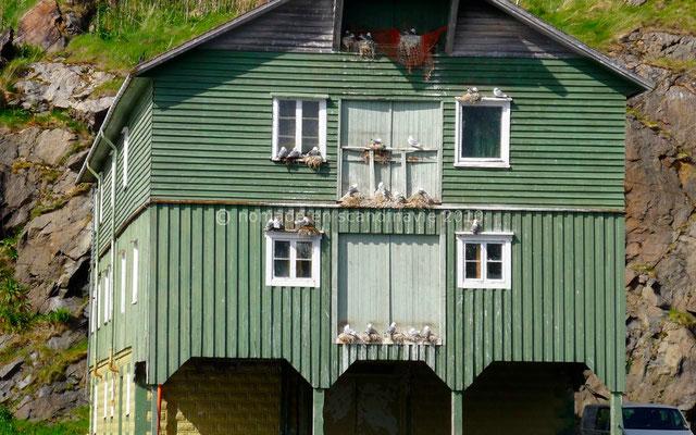 Les goélands squattent les façades des hangars.