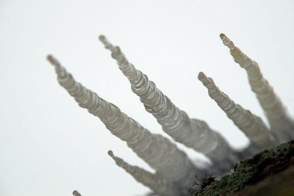 """""""Eiszapfen"""" von Renate Bauer-Zölch"""