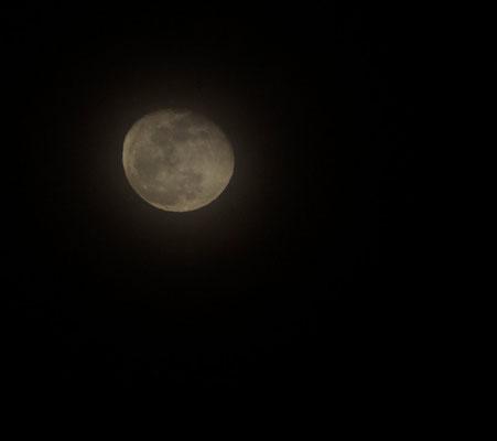 """""""Moon"""" von Renate Bauer-Zölch"""