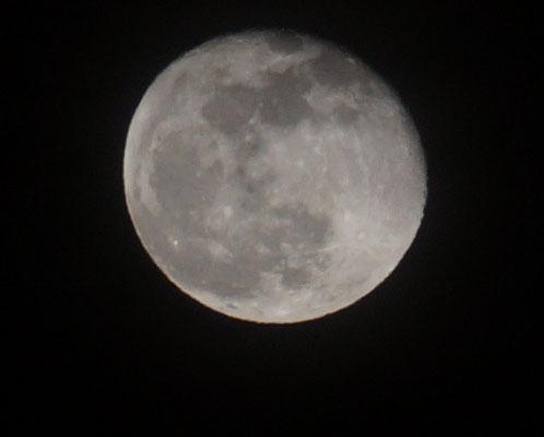 """""""La Luna"""" von Renate Bauer-Zölch"""