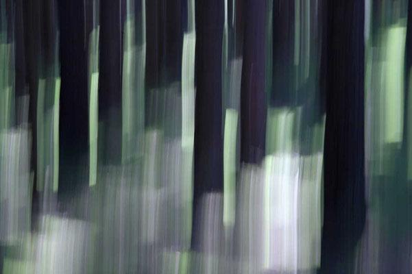 Zauberwald von Walter J. Pilsak