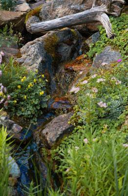 Garten der Grillparty von Renate Bauer Zölch