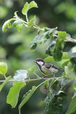Vogelparadies  von Lisa Langer