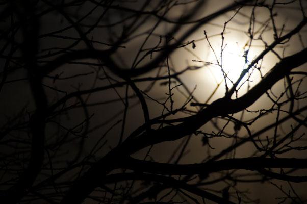 """""""Moonlight"""" von Renate Bauer-Zölch"""