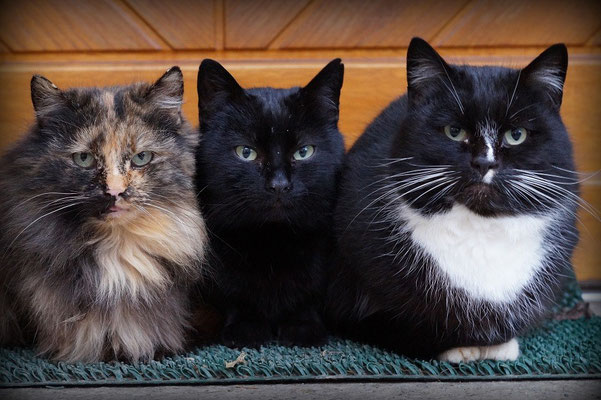 """""""Cats"""" von Renate Bauer-Zölch"""