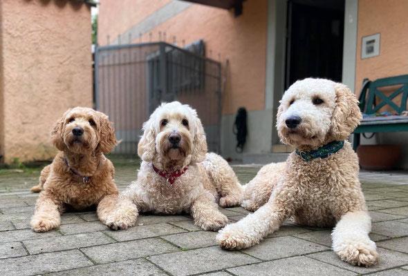Fanny, Frieda und Paul