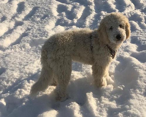 Schnee Sissi