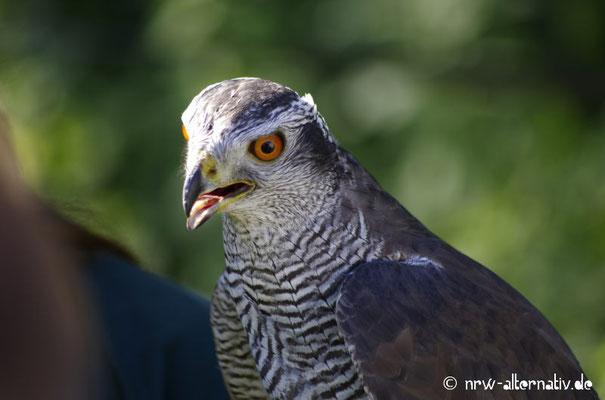 Edle Vögel gastierten bei Haus Visbeck