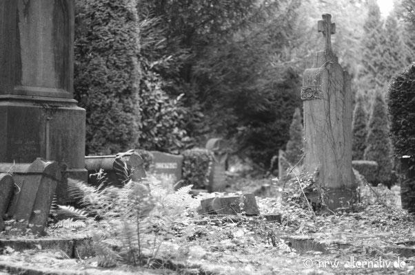Einige Teile des Friedhofs scheinen regelrecht verwildert zu sein.